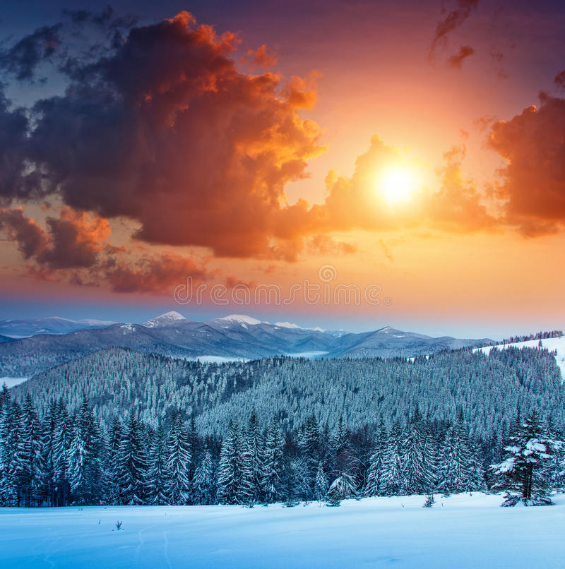 Colorful winter sunrise in the mountains. View of the fog and snow tops. royalty free stock image