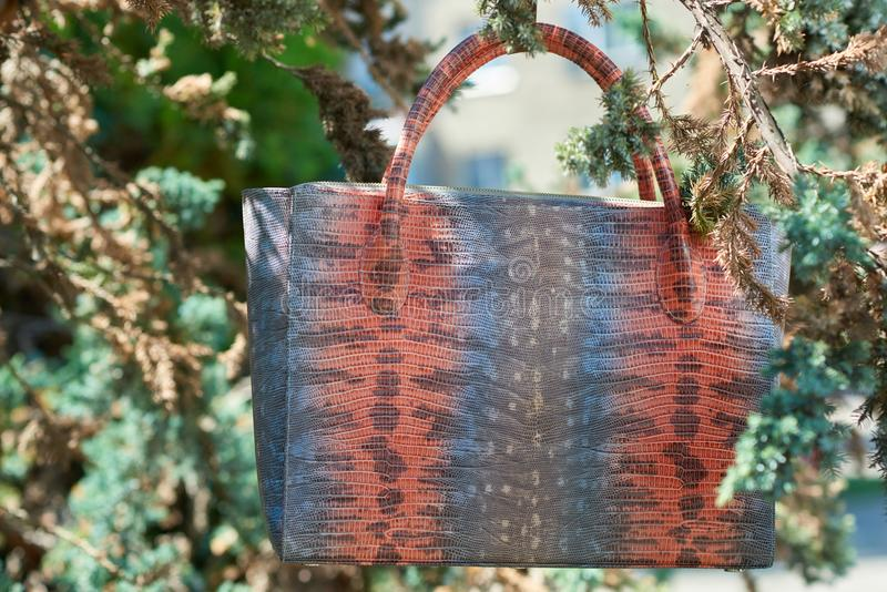 Colorful woman s bag with imitation of snake s skin stock images