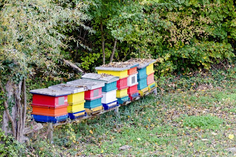 Colorful wooden bee-hives. Row of colorful wooden bee-hives at the edge of a forest stock image