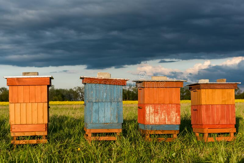 Colorful Wooden Beehives in Fields. Organic Honey Production. Beekeeping and Apiary Concept royalty free stock images