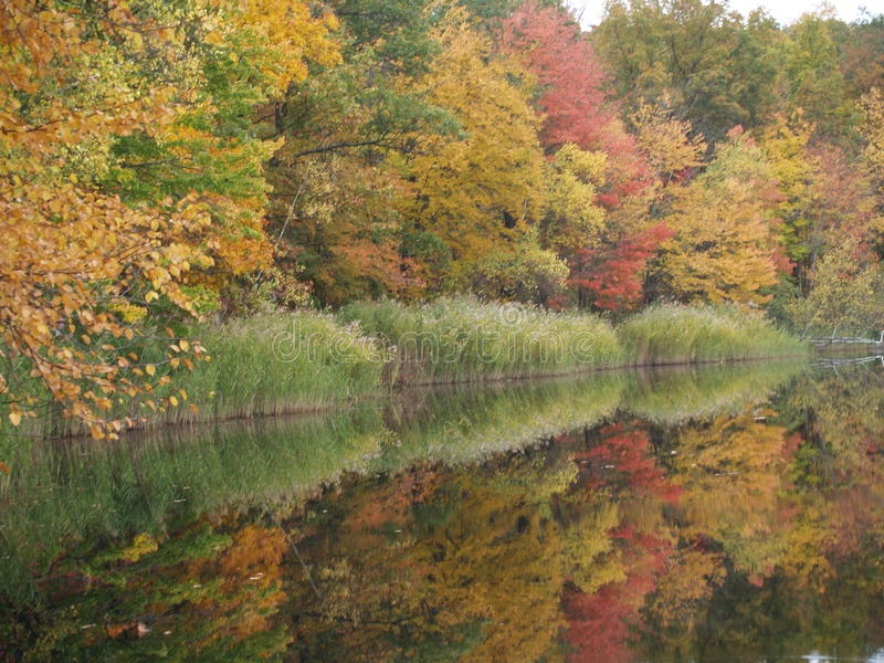 Colorful woods reflected in lake stock photos