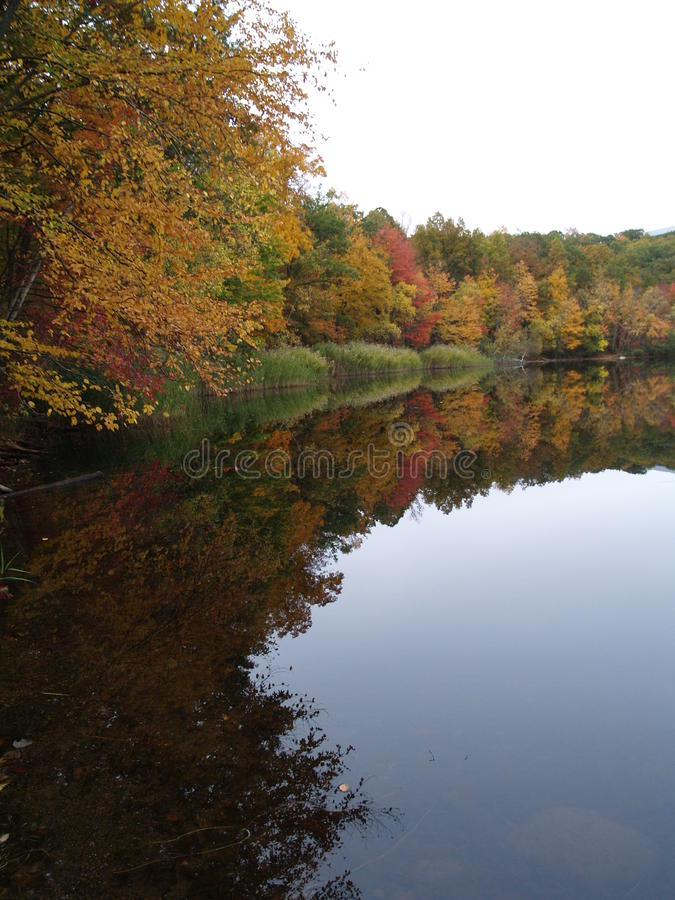Colorful woods reflected in lake stock images