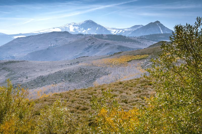 Colorful yellow aspen trees in the fall at a Conway Summit roadside vista point on US 395 in Mono County California, looking at. The Sierra Nevada mountains royalty free stock image