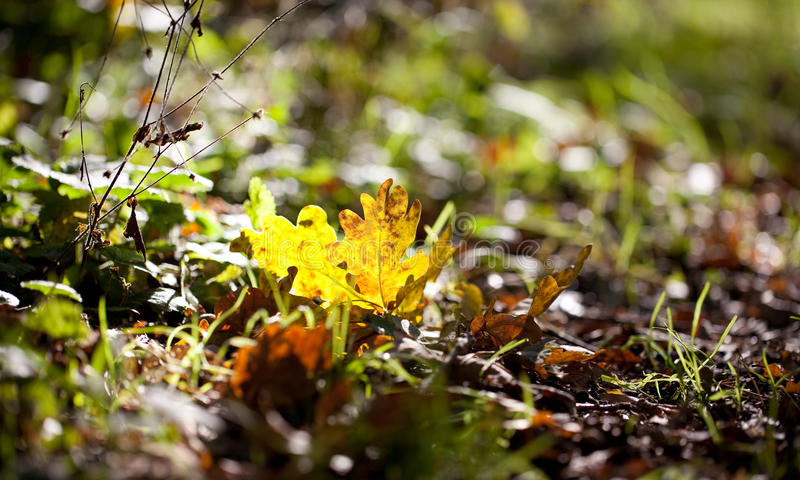 Colorful yellow autumn leaf on a forest floor stock image
