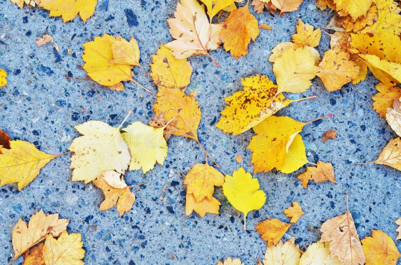 Colorful yellow autumn leafs on concrete surface background. royalty free stock photos
