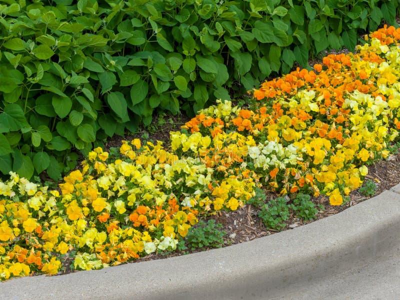 Colorful yellow and orange flower border stock image