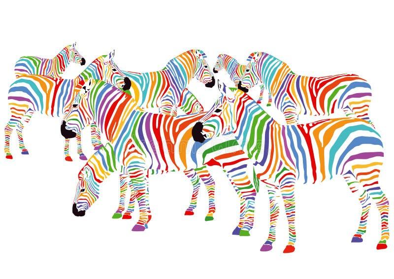 Colorful zebras vector illustration