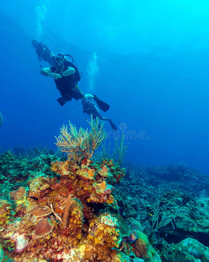 Colorfull礁石和小组潜水者,缓慢地Cayo 免版税库存照片