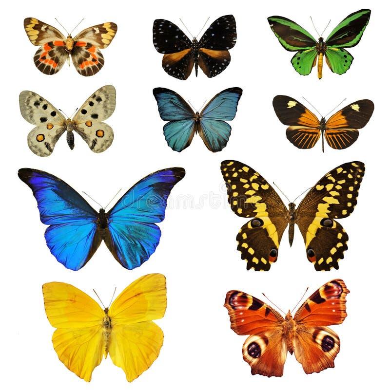 colorfull бабочки стоковые изображения