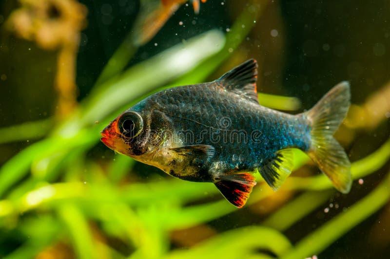 Colorfull-Aquariumfische lizenzfreie stockbilder