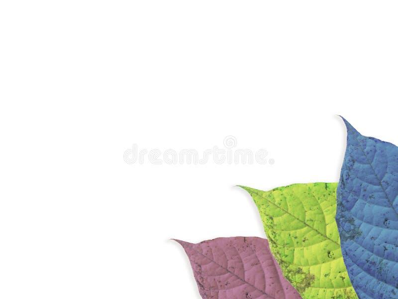 Colorfull-Blatt lokalisiert stockfoto