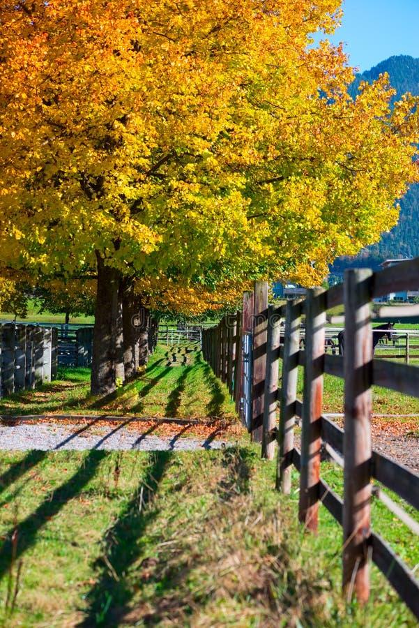 Colorfull-Fall-Herbstbäume stockbilder