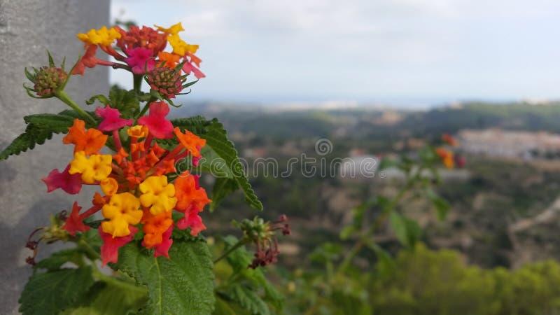 Colorfull floresce o vermelho alaranjado fotografia de stock