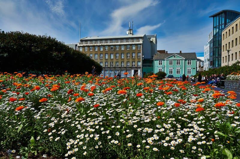 Colorfull flowers in Reykjavik stock photos