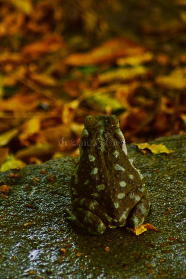 Colorfull-Frosch lizenzfreie stockfotos