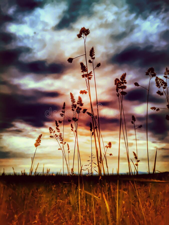 Colorfull grass detail of nature. Landscape in evening, clouds and sky, field royalty free stock image