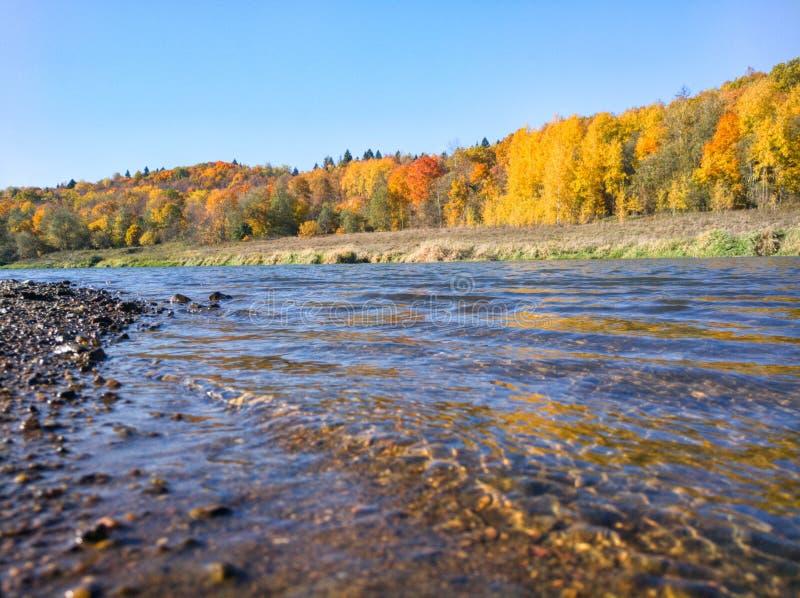 Colorfull-Herbstwald nahe der Flussbank lizenzfreies stockbild