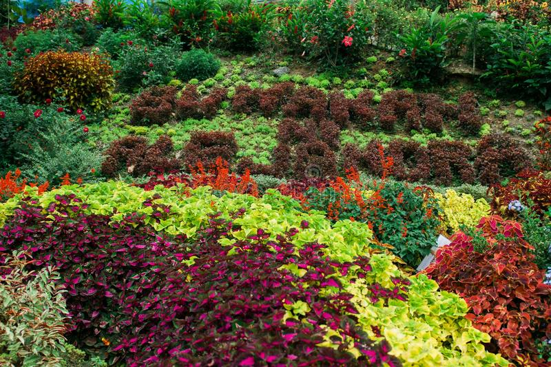 Colorfull kwitnie w górze obrazy royalty free