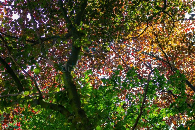Colorfull lämnar i den trevliga bakgrunden för sommar royaltyfria bilder