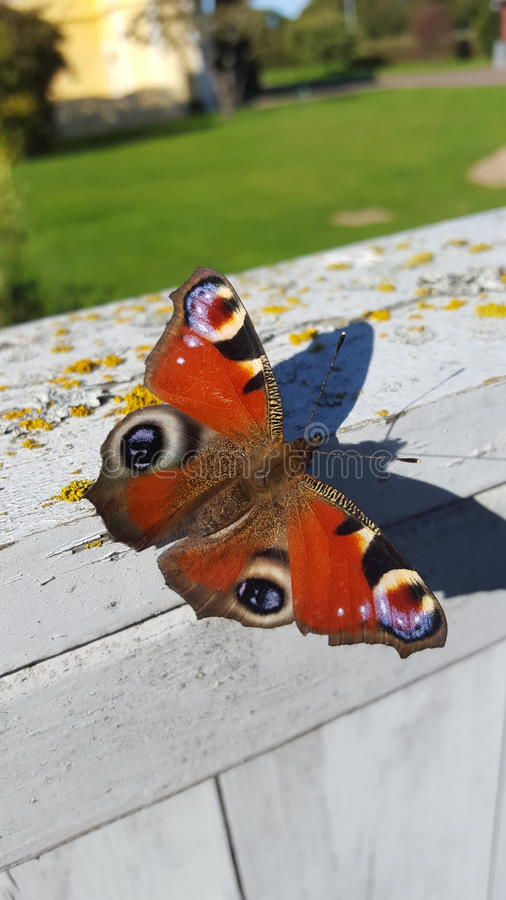 Colorfull motyl fotografia royalty free