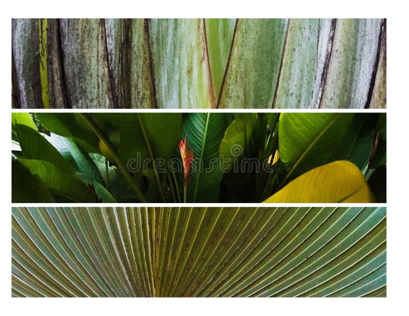 Colorfull natur arkivfoto