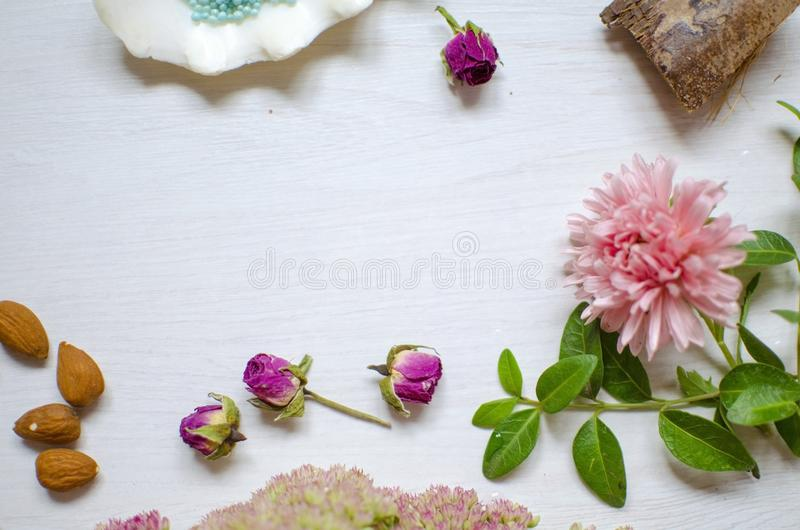 Colorfull nature background. Midtone pink flower with green leaves and white shell royalty free stock images