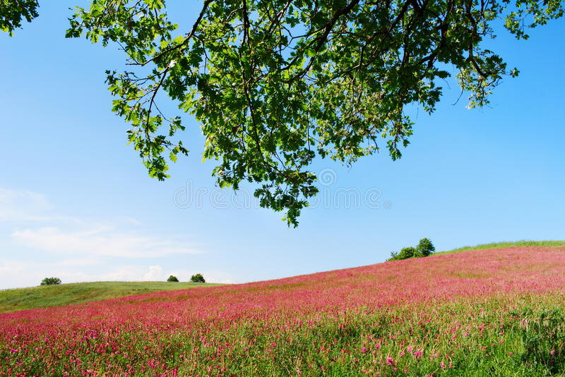 Colorfull prairie. Early summer landscape from center Italy with cultivated land and tree branches royalty free stock photography