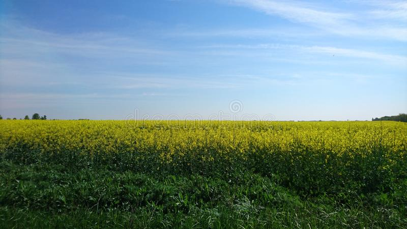 Colorfull Vojvodina royalty free stock photography