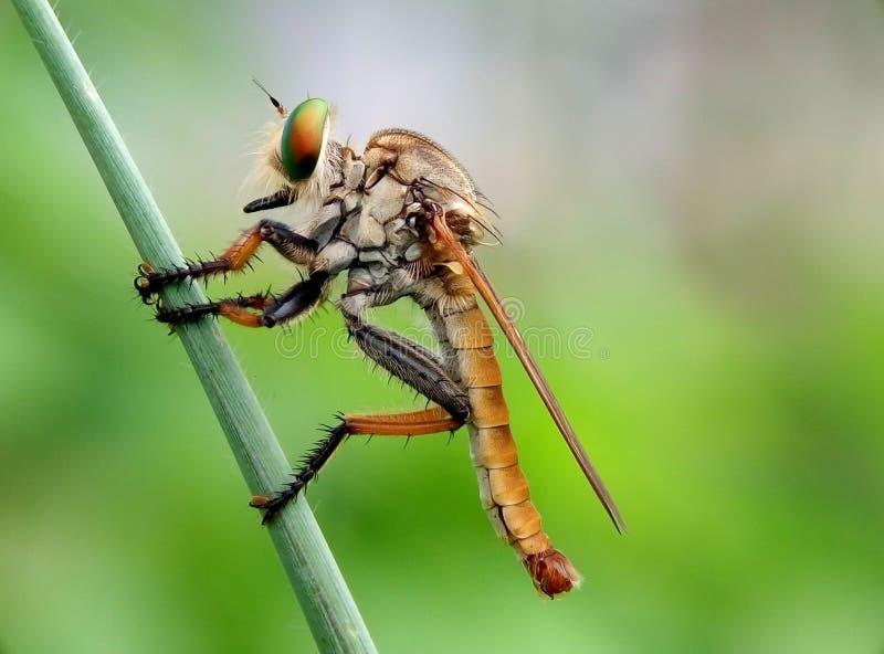 Colorfulllibel stock foto's