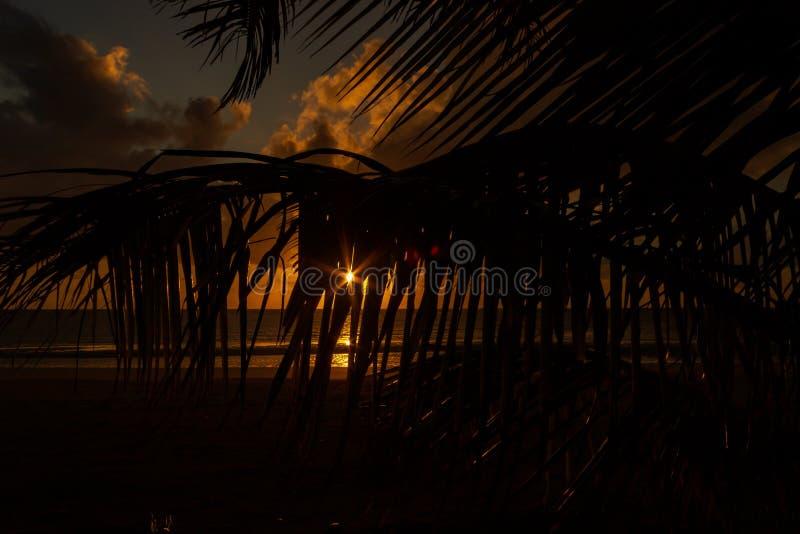 colorfullsoluppg?ng ?ver korallhavet p? udde Tributation i den Daintree regionen av avl?gsna norr Queensland med g?mma i handflat royaltyfri bild