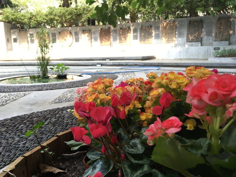 Colorfully fiore fotografie stock libere da diritti