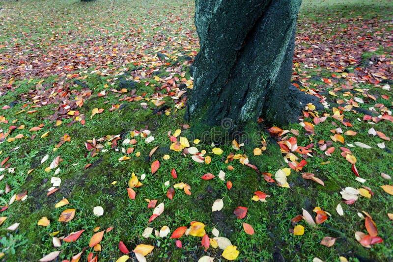 Colori al suolo di autunno immagine stock libera da diritti