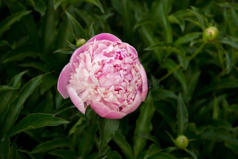 Colori dei fiori verdi di Sun bei immagini stock libere da diritti