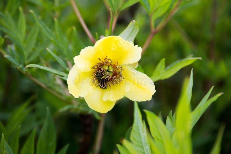 Colori dei fiori verdi di Sun bei fotografia stock libera da diritti