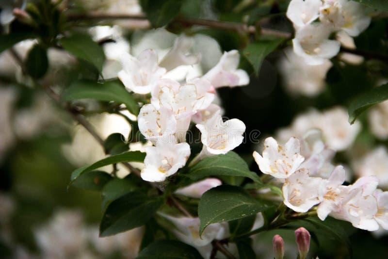 Colori dei fiori verdi di Sun bei fotografia stock