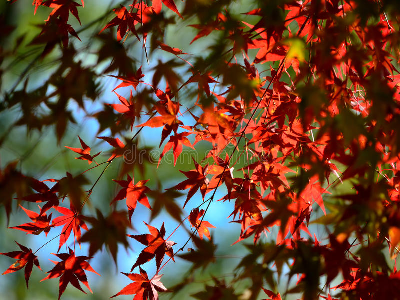 Colori dei fogli di autunno fotografia stock libera da diritti