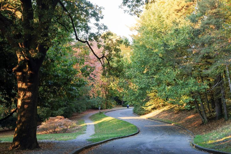 Colori della caduta al parco volontario, Seattle Washington fotografia stock
