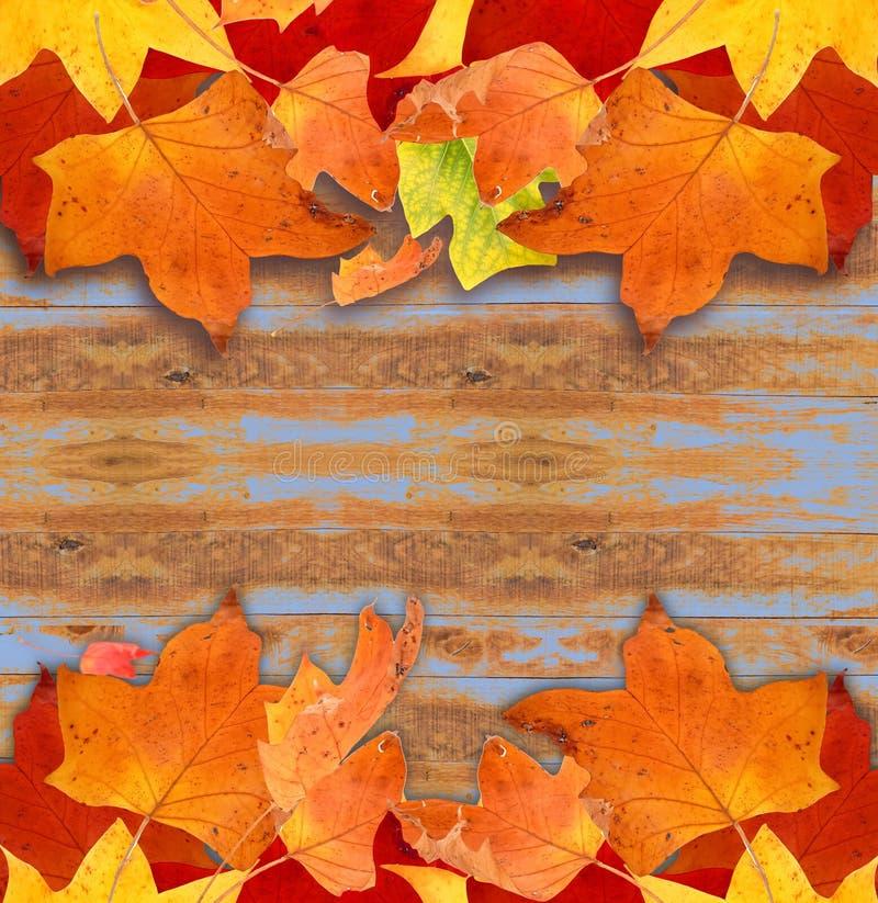 Colori della foglia di autunno isolati per fondo immagini stock