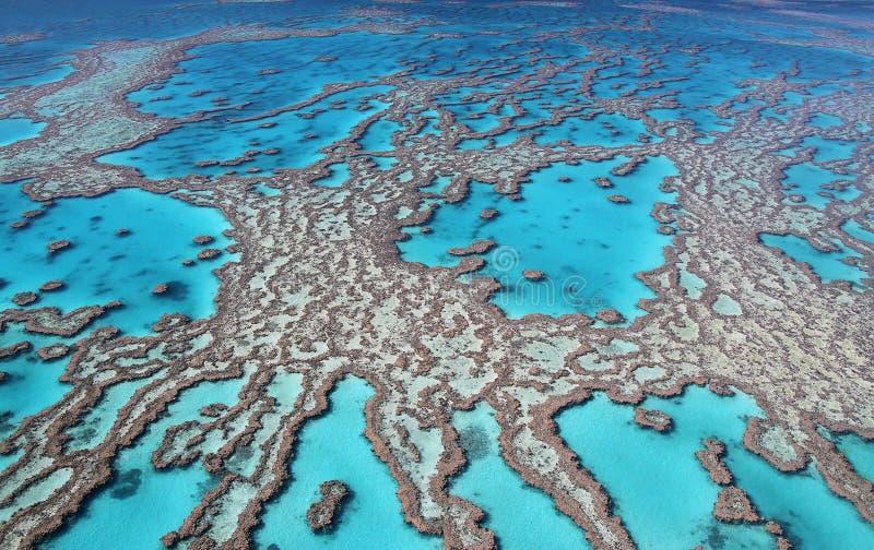 Colori della Grande barriera corallina fotografia stock