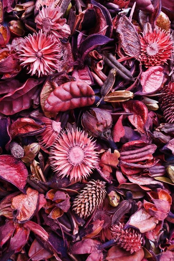 Download Colori della natura. immagine stock. Immagine di aromatherapy - 7313089