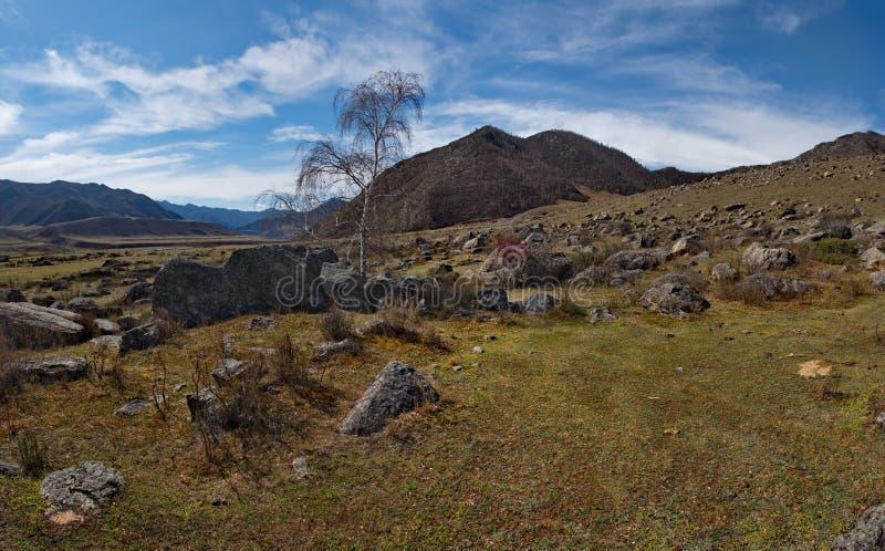 Colori della primavera delle steppe di pietra delle montagne di Altai immagine stock