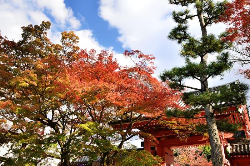 Colori delle foglie di autunno e del portone rosso del tempio, Kyoto Giappone immagini stock