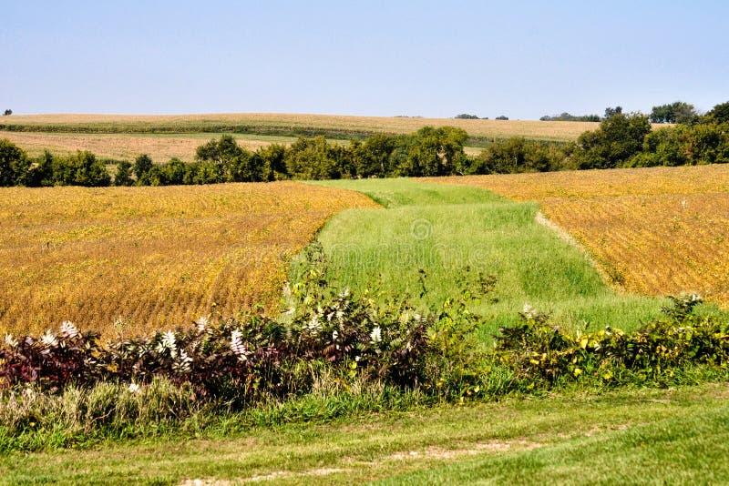 Colori dello Iowa immagine stock libera da diritti