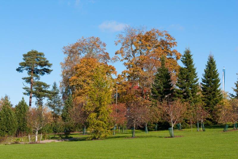Colori di autunno immagine stock immagine di prato casa - Immagine di lucertola a colori ...