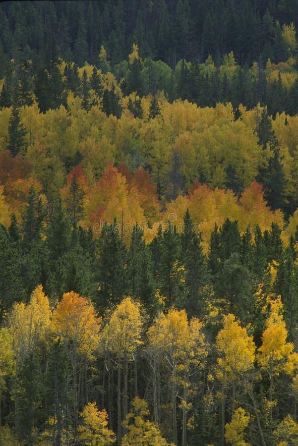 Colori di autunno, 272-3-8 fotografie stock libere da diritti