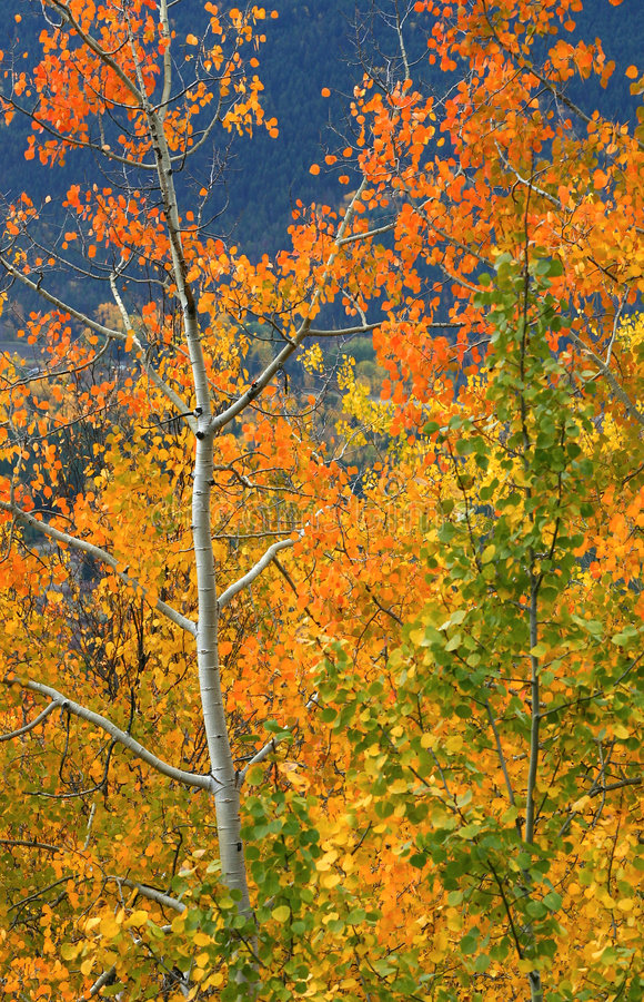 Colori di autunno immagine stock libera da diritti