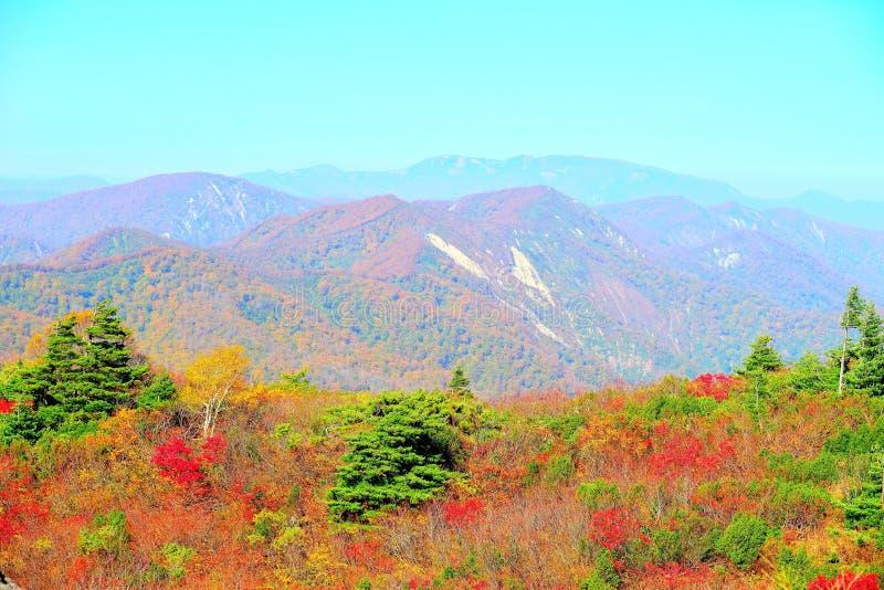 Colori di autunno agli altopiani di Kurikoma in Akita ed in Iwate fotografie stock libere da diritti