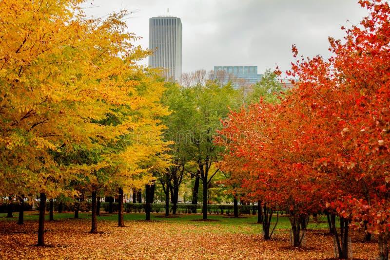 Colori di autunno in Chicago immagini stock