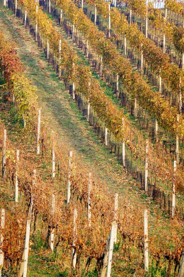 Colori di autunno della vite fotografie stock