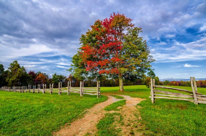Colori di autunno di stabilimento di Hensley fotografie stock